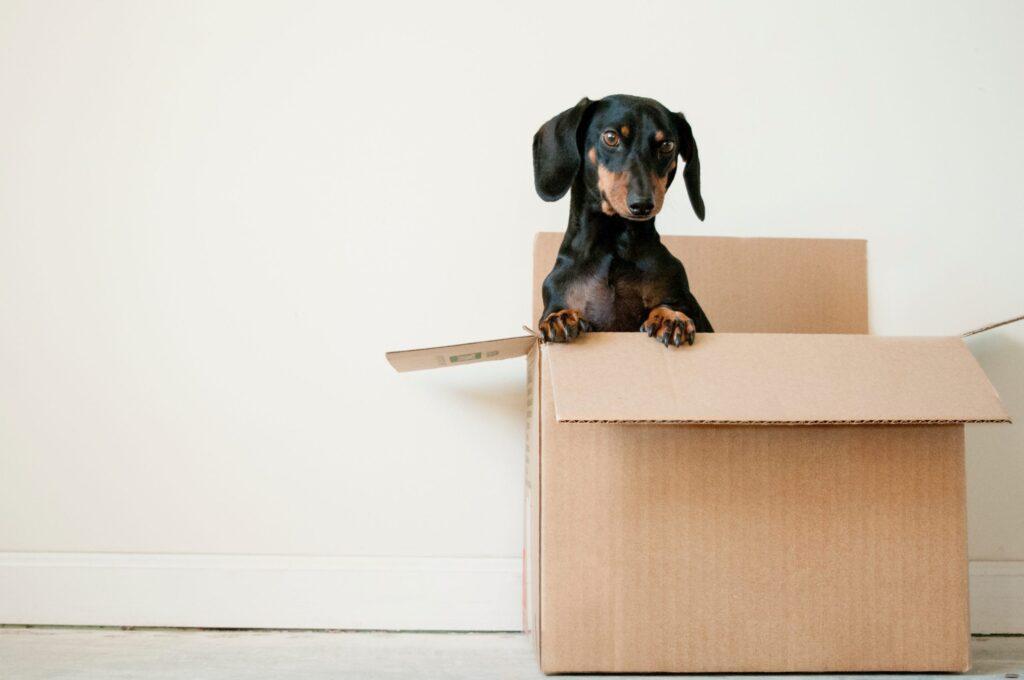 失業保険受給中に引っ越ししたときの住所変更手続きは?